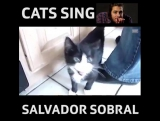Cute cats singing to Amar Pelos Dois