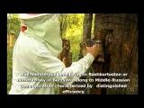 Дикий башкирский мёд