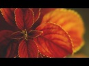 Karunesh Call of the Mystic Beautiful Relaxation Music Full album tracklist