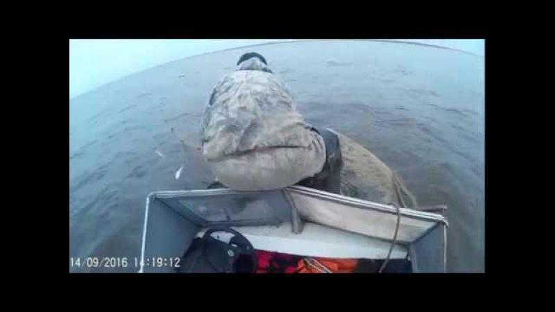 Russia рыбалка промысел омуль не Байкальский, Лаптевский Yakutia