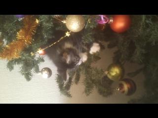 Кошак влез на ёлку!