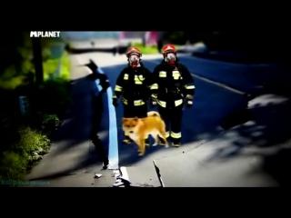 «Введение в собаковедение» (22 серия) (Научно-популярный, животные, 2010)
