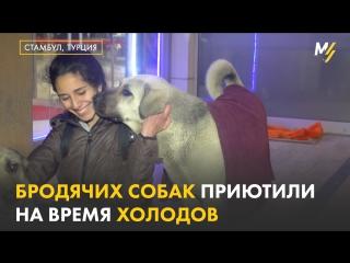 Бездомные собаки в Турции