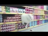 КОТЫ ПРИКОЛЫ 2016 - СМЕШНЫЕ КОТЫ - Funny Cats 2016 ТОПОВАЯ ПОДБОРКА