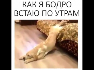 Как я бодро встаю по утрам