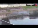 В Кременчуге лебедь напал на мужика, мывшегося в пруду из-за отключенной горячей воды.