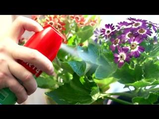 Вредитель комнатных растений паутинный клещ. Как бороться в домашних условиях