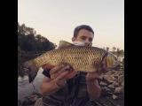 Chub Fishing | Klenie na brombe Hunter Polska |Kleń 50 cm!!! | Go Pro Hero 3+ Black Edytion