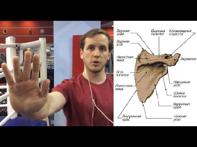 Стабилизация лопатки Здоровье плечевого сустава