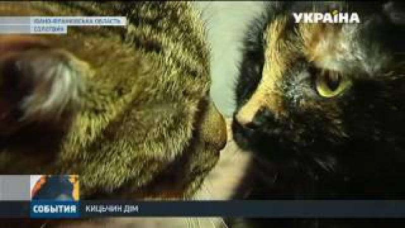 На Прикарпатті жінка прихистила понад сім десятків котів і майже тридцять собак