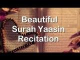 Surah Yaasin  Ustaz Nafis Yaakob Al Hafiz