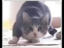 Shake_cat