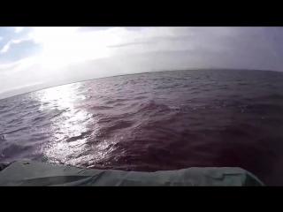(FreeHdMaza.IN)_Рыбалка_сетями._Ловля_Кеты_на_Амуре_напловной_сетью_2016_Fishing_for_salmon_in_the_Amur_network