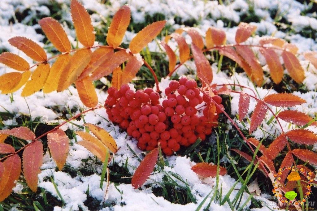 С первым снегом красивые картинки