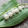 Saison Romantique - цветы из полимерной глины