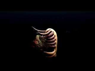 Опасный голый червь обнаружен в Канаде