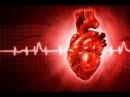 О сердечной мышце | Профессор Селуянов
