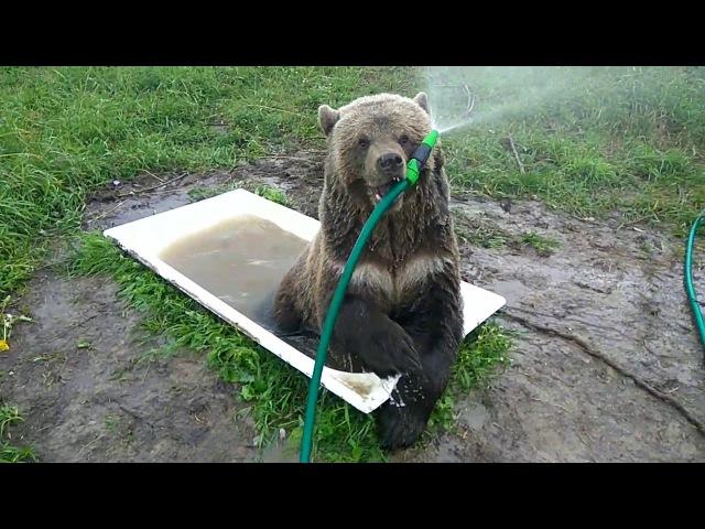 Утренний приём ванны Мансуром.