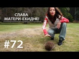 СЛАВА МАТЕРИ-ЕХИДНЕ!  Всё как у зверей #72