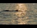 Самые умные животные. Фильм №1 (2012.07.21)