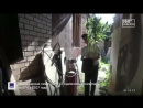 Плантацию конопли вырастил у себя дома житель подмосковной Балашихи