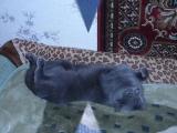 Маша Ржевская - Когда я стану кошкой