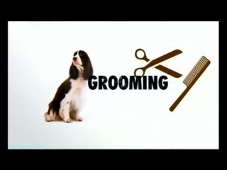 «Введение в собаковедение» (07 серия) (Научно-популярный, животные, 2008)
