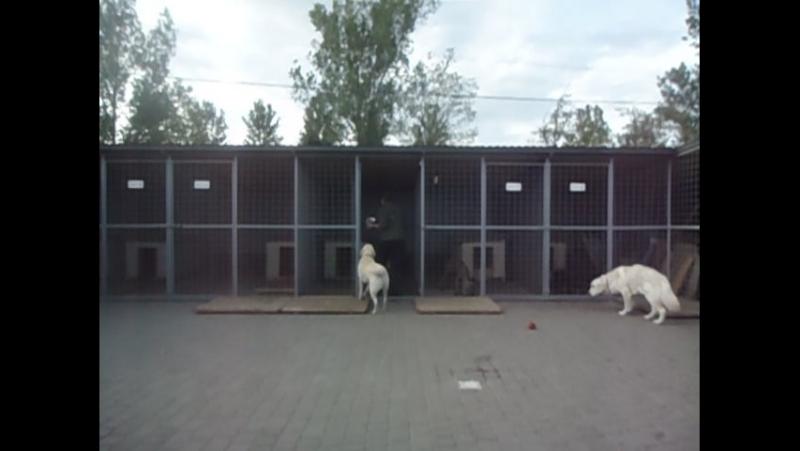 ЗооГотель 🐾😃🏆 Чемпіон Центр дозвілля для собак