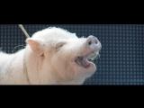 Музыка из рекламы Kaspersky - Как Касперский звук свиньи придумал (Россия) (2017)