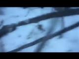 Житель Якутии спас кабаргу