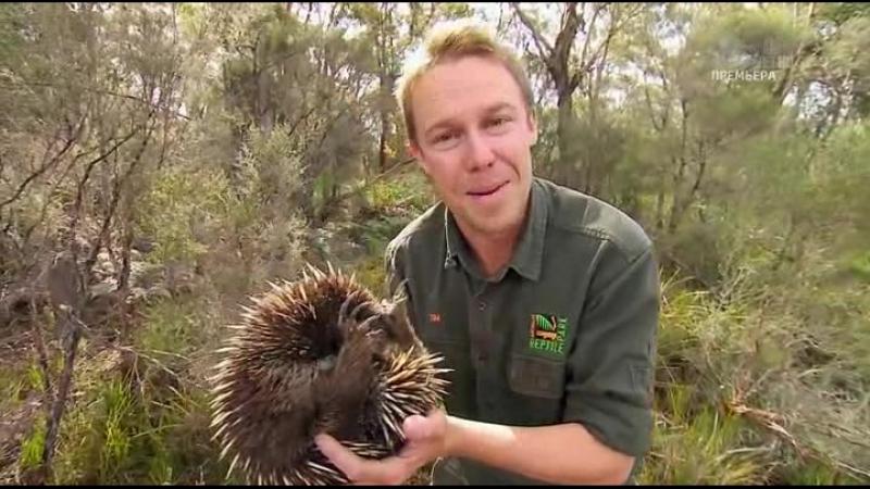 Дикая жизнь с Тимом Фолкнером The Wild Life of Tim Faulkner 2013 12 смотреть онлайн без регистрации