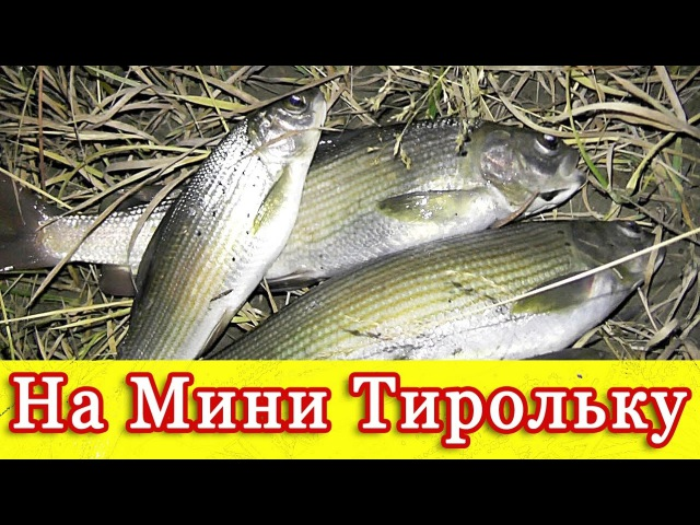 Очередная рыбалка на реке Чуя.Рыбалка на Алтае.