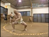 Sumo-Amateurs and adepts