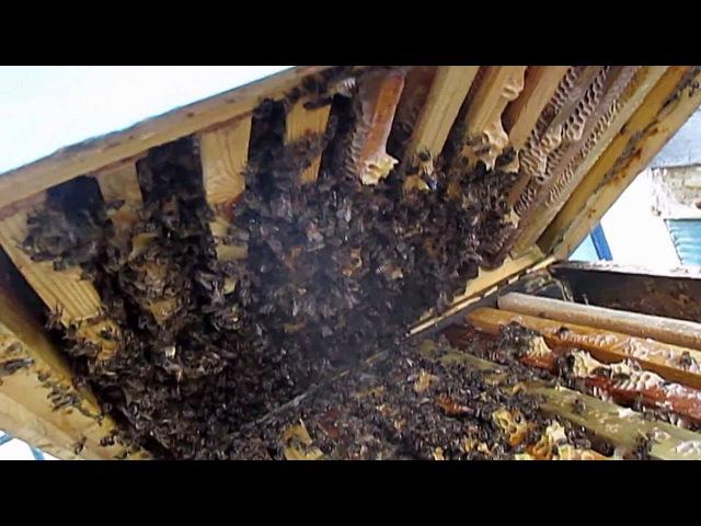Обработка пчел бипином Работы на пасеке в ноябре