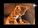 Спящие котята, засыпающие кошки Очень забавные!! Funny Kittens, Falling Asleep, Funny Cats