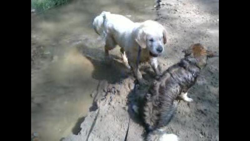 Чумазая собака Кибо 16,07,17