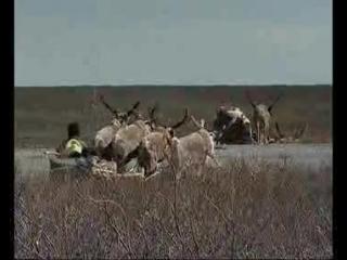 #ХэлоуВоркута | Согретые холодом документальный фильм о Воркуте