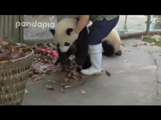 Уборщица дворник борется с пандами!