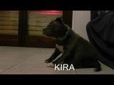 KIRA the myth american bully