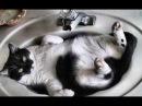 Смешные кошки приколы про кошек и котов 2017 40 Продолжаем смеяться с котиков