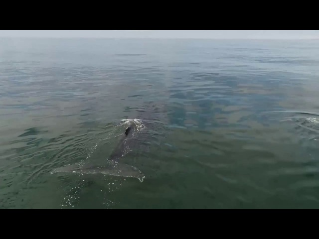 Шоу фонтанов горбатых китов в Кроноцком заповеднике