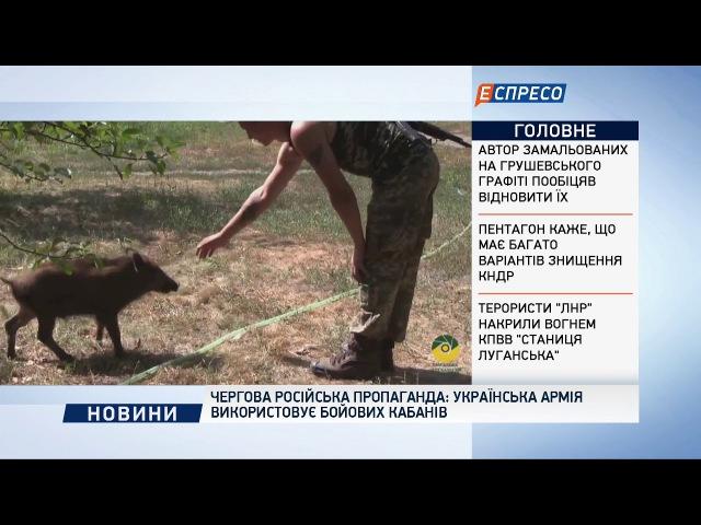 Чергова російська пропаганда українська армія використовує бойових кабанів