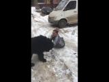 Пёс решил трахнуть мужика