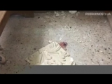 В Египте прогремели взрывы в храмах