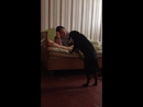 мой любимый пес играет с подругой