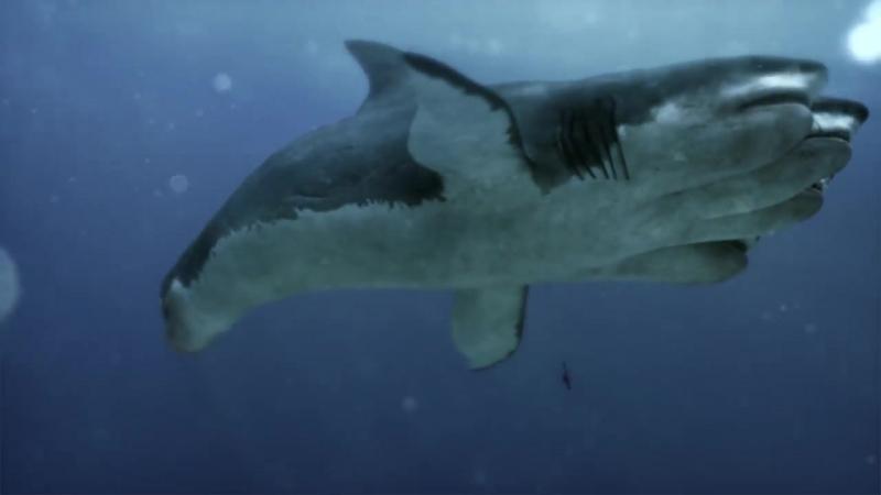 Нападение пятиглавой акулы / 5-Headed Shark Attack (2017г.) (Трейлер)
