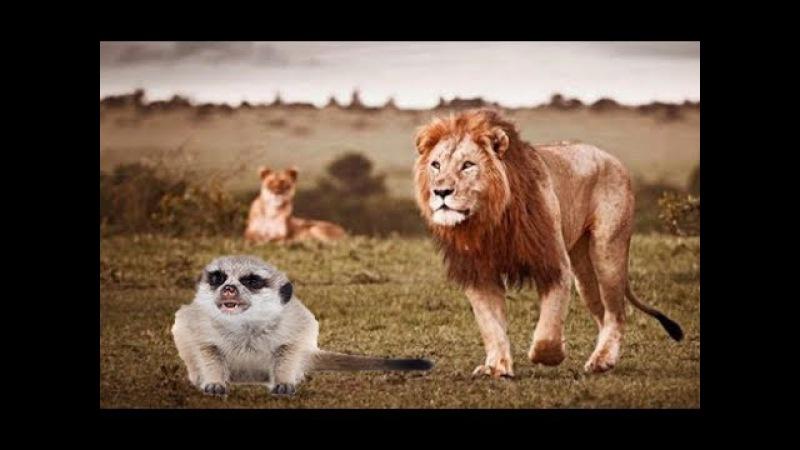 Отпускаем всех зверей! Пусть сурикаты живут в Африке! Поговорим о реалиях современной жизни
