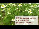 МК Вышиваем листья у разных видов ромашек Часть 2 Разживалова Наталья