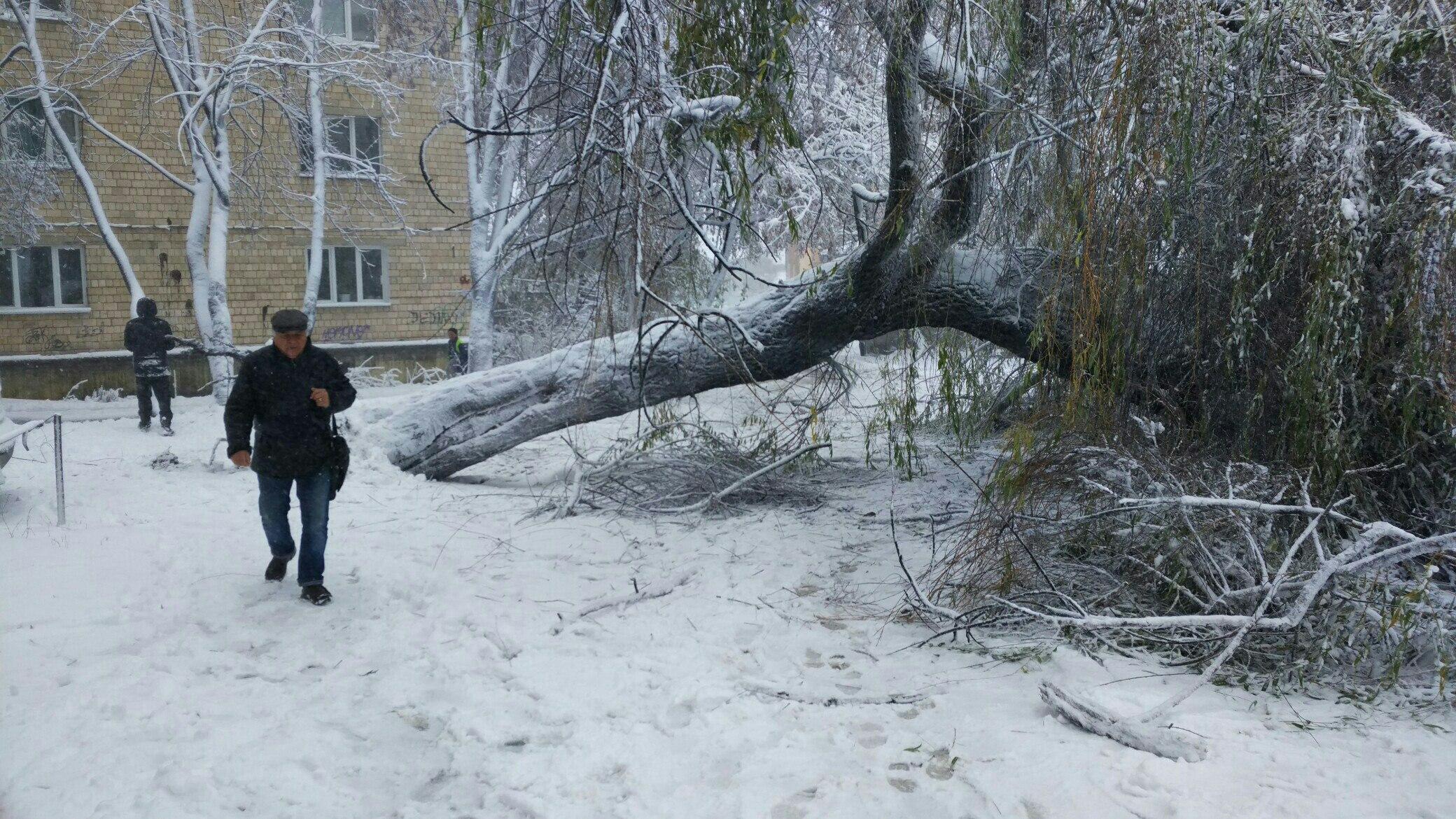 Снегопад в Украине: спасатели вытаскивают автомобили из снежных заносов и расчищают трассы, заваленные сломанными деревьями - Цензор.НЕТ 2745