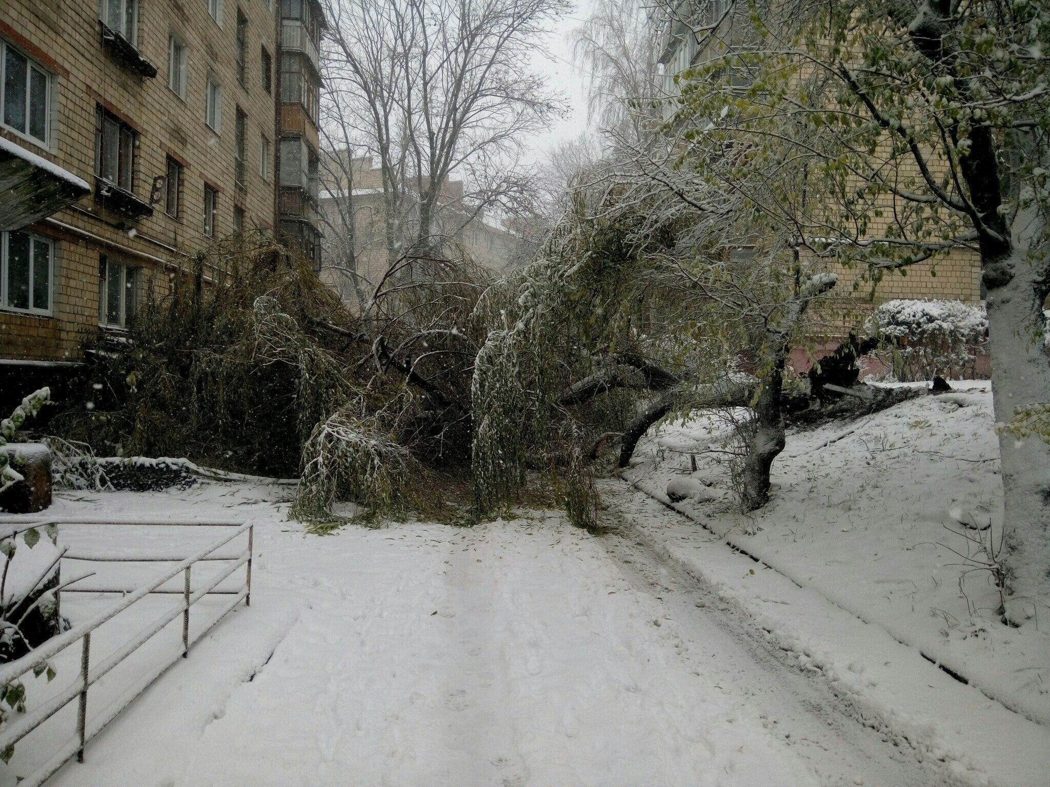 Снегопад в Украине: спасатели вытаскивают автомобили из снежных заносов и расчищают трассы, заваленные сломанными деревьями - Цензор.НЕТ 9447